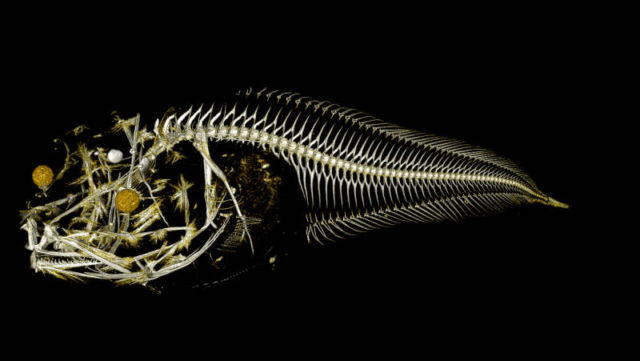 Terrifying New Fish Species discovered