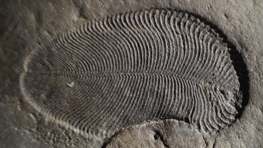 The Earliest Animal Lived on Earth 558 million years ago