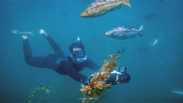 SeaFlyer ultimate Underwater Scooter (2)