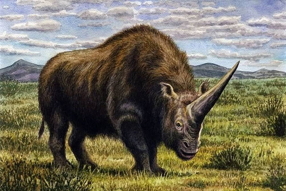A giant Unicorn roamed the Earth 39,000 years ago