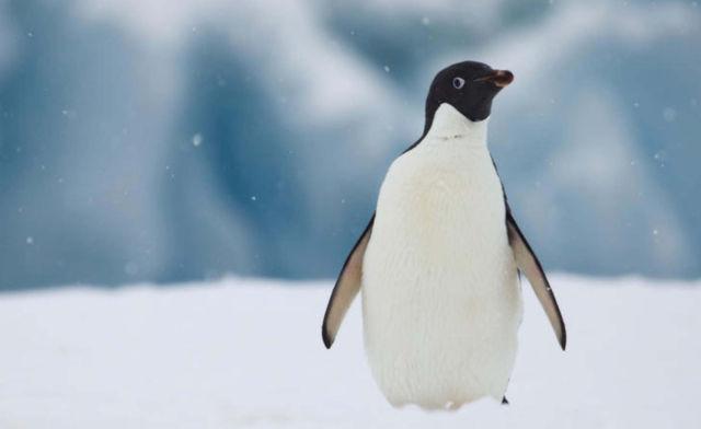 We've Lost 60% of our Vertebrate Wildlife