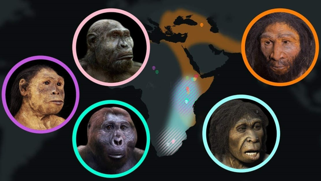 Seven Million Years of Human Evolution – video