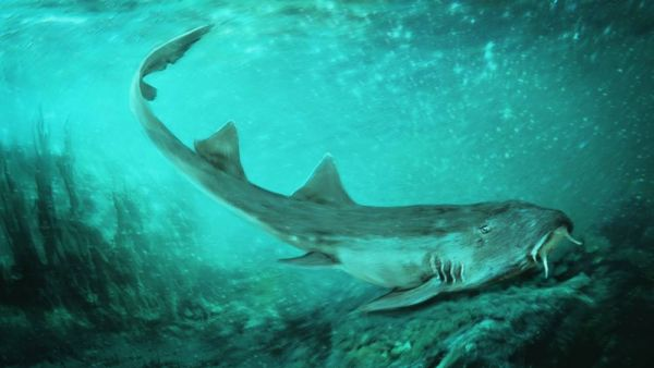 Ancient Carpet Shark with 'Spaceship-Shaped' Teeth discovered