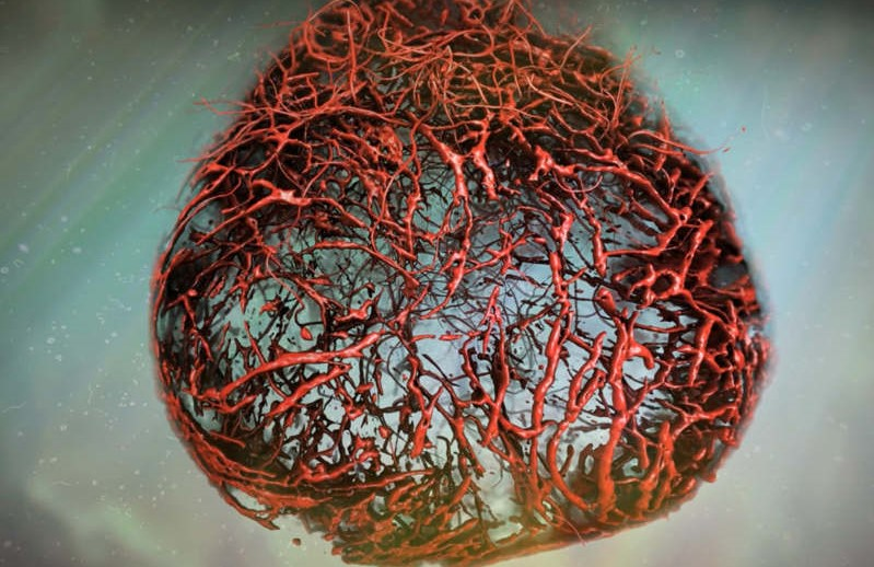 Growing Perfect Human Blood Vessels in a Lab