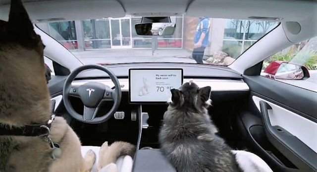 Tesla's cooling Dog and Sentry Mode