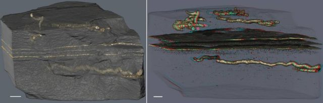 The Oldest Evidence of Mobility is 2.1 billion years old