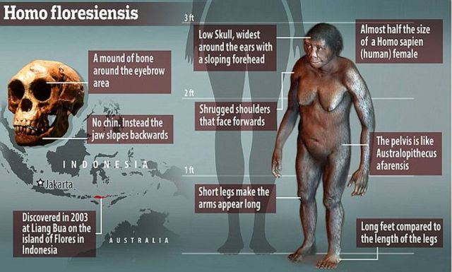New mini-human discovered