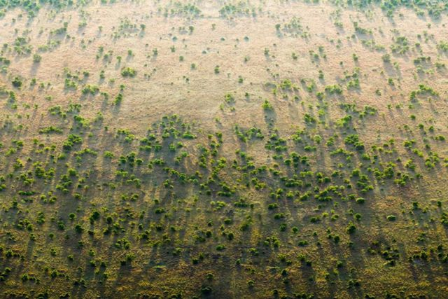 The 'Great Green Wall' (2)