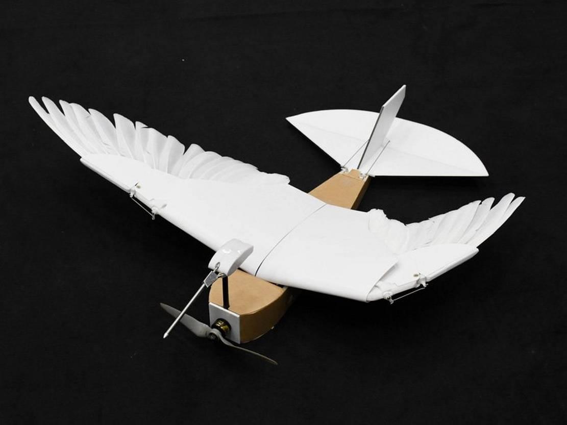 PigeonBot (3)