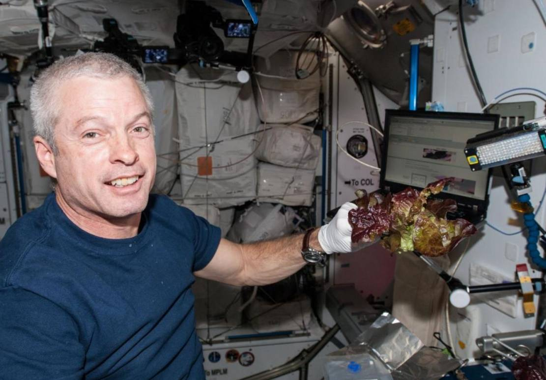 Space Station grown Lettuce