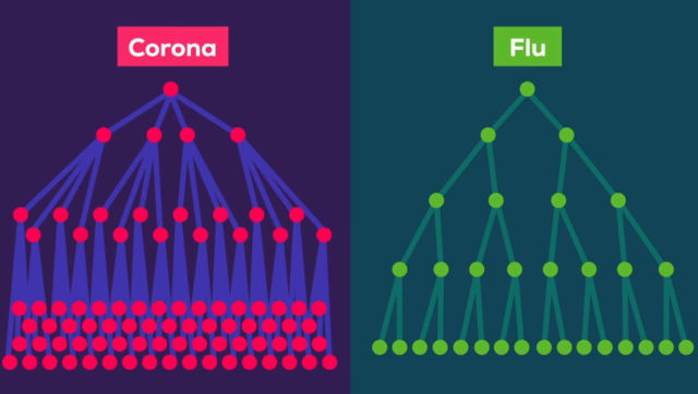 The Coronavirus explained