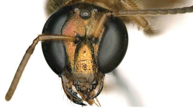A Half Male, Half Female Bee