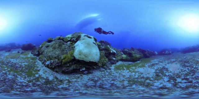 Take a virtual dive into the Ocean (3)
