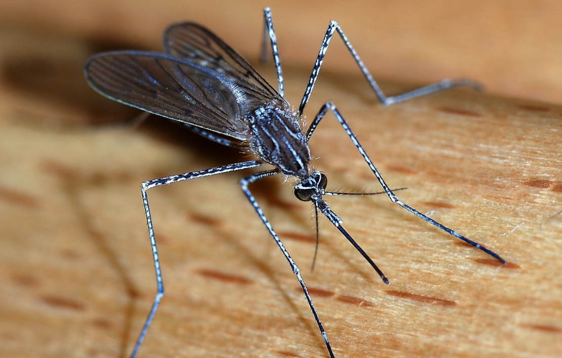 Malaria Transmission-blocking Microbe discovered