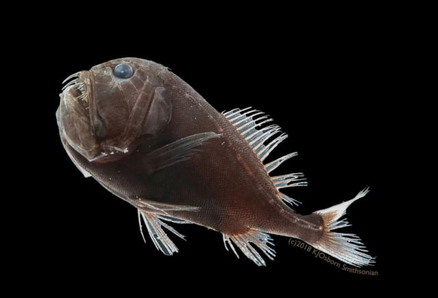 Deep-Sea Ultra-Black Fish (3)