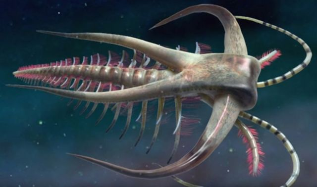 The Cambrian Period- Life's Prototype Stage (3)