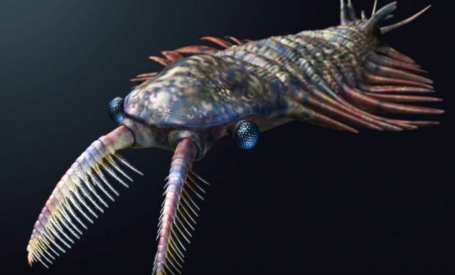 The Cambrian Period- Life's Prototype Stage (2)