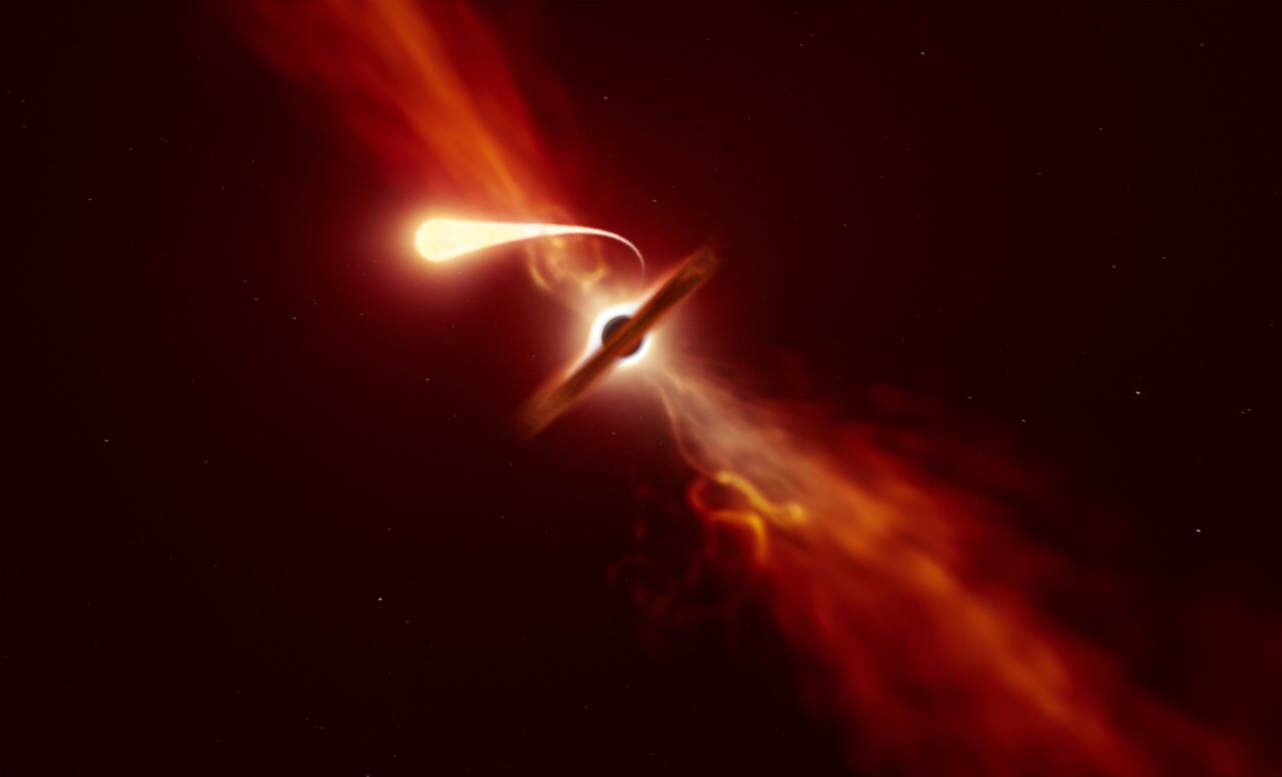 Last Moments of Star Devoured by a Black Hole