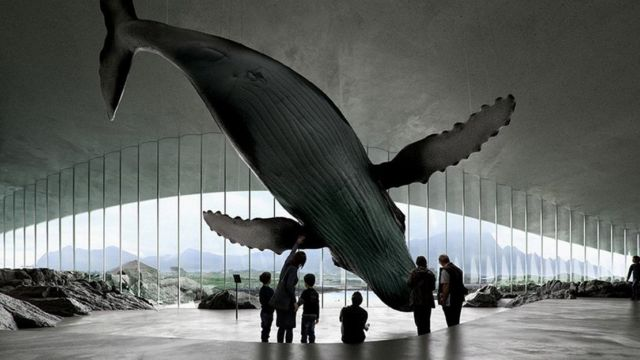 The Whale new attraction center (6)