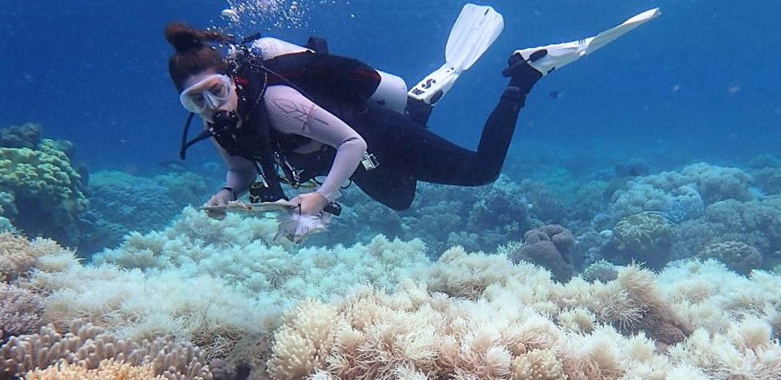 The last 25 years we've Lost 50% of Great Barrier Reef Corals