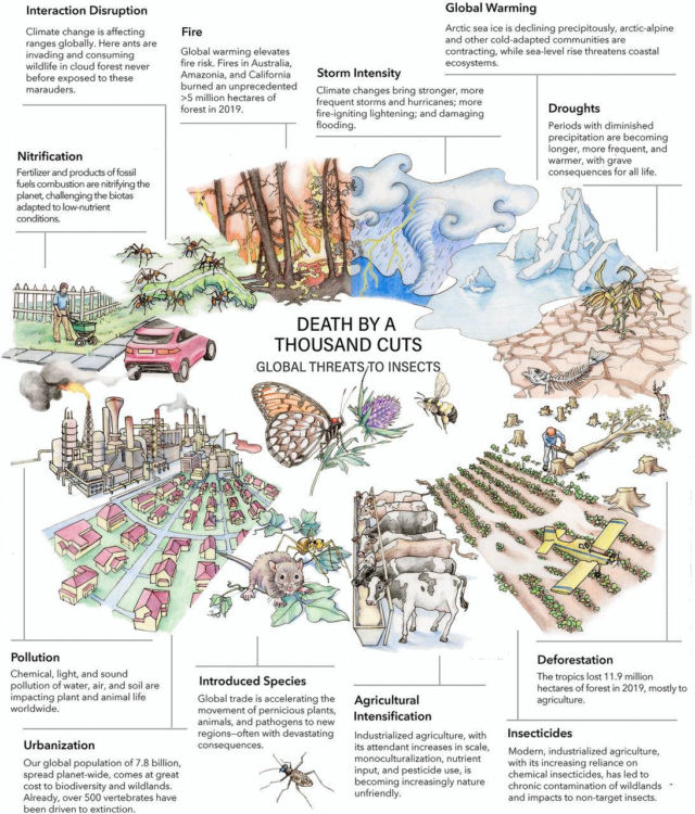 A Global Insect Apocalypse