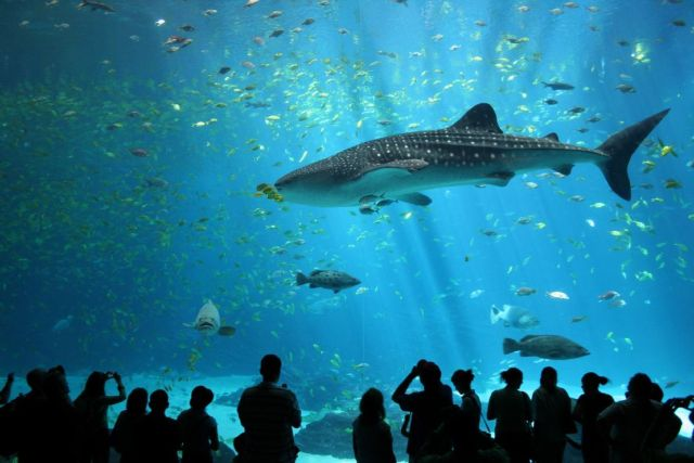 Our Planet has Lost 70% of its Sharks in just 50 years