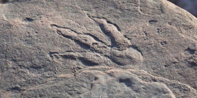 215-Million-Year-Old Dinosaur Footprint stunningly preserved discovered