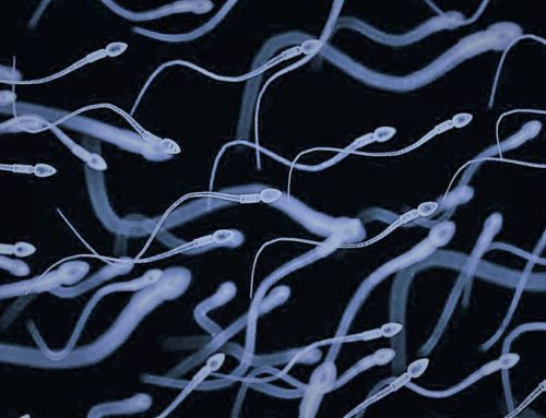 Some Sperms Poison their Competitors to reach the egg cell first