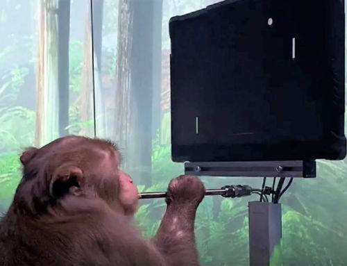 Monkey playing MindPong