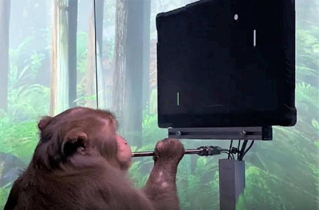 Monkey playing MindPong