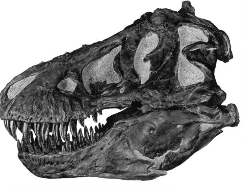 There were Billions of T-Rex terrorizing Earth