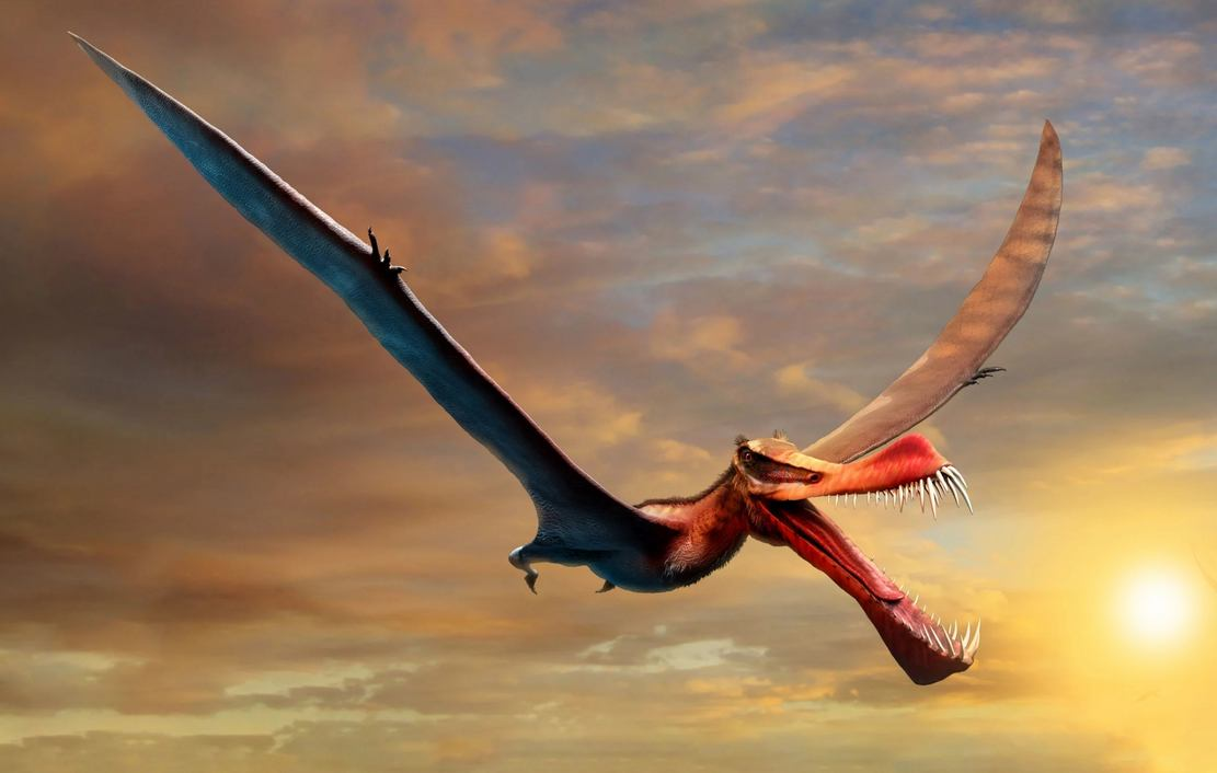 Giant 7-meter-wide Pterosaur