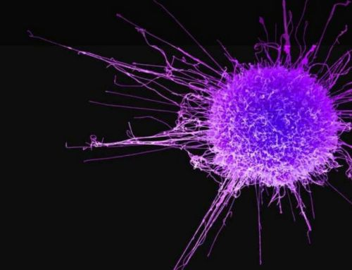 The Achilles Heel Of Cancer discovered