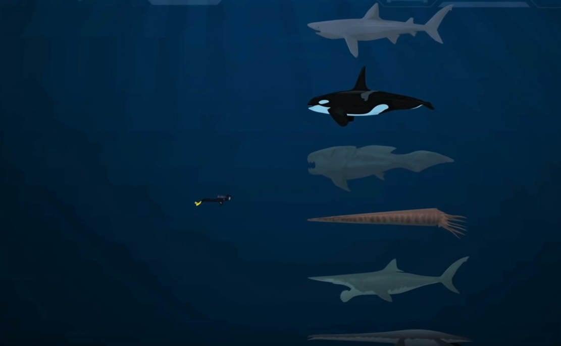 Largest Sea Creatures Size Comparison